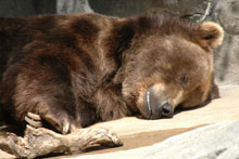 Sleeping with the bears experience Tour